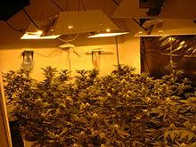 Planifier l'éclairage des plantes 4